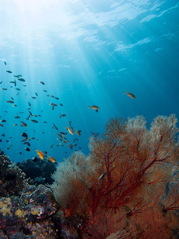Underwater Photo Gallery: Best of Tubbataha's Coral Reefs